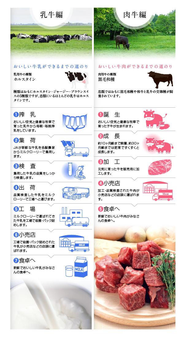 JA忠類の畜産物である乳牛と肉牛の説明